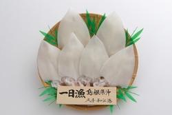 島根県大田市のお土産大田ブランド認定商品 「一日漁」の白いか一夜干